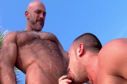 Muscly Bear engulf gigantic cock