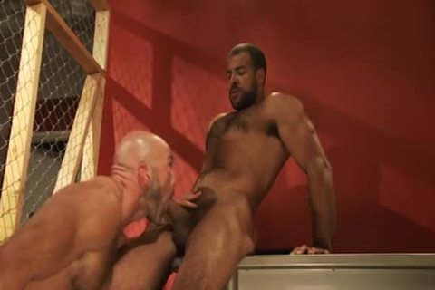 Muscly black bear pounded