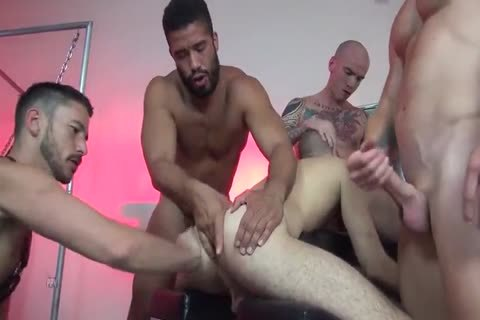 cock gay stud sucking