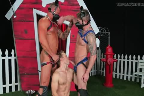 Puppies Destroing My small booty