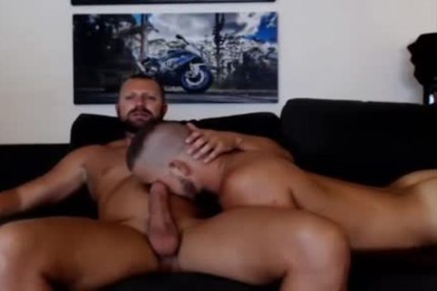 young Bear Sucks A daddy Bears weenie Live On Cruisingcams Com