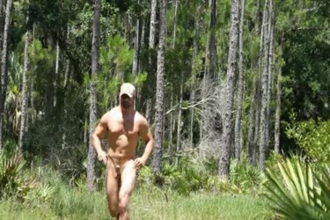 big Timber In The Woods