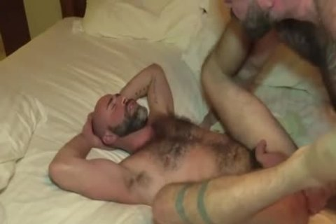 The Bear Likes The large dong Of The Bear Daddy